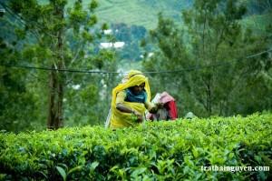 20091010155057_nuwara_eliya_tea_factory_4_srilanka-d7d3a