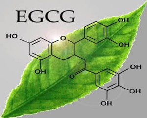 EGCG trong tra xanh